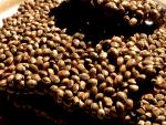 Flavored Hemp Seed's
